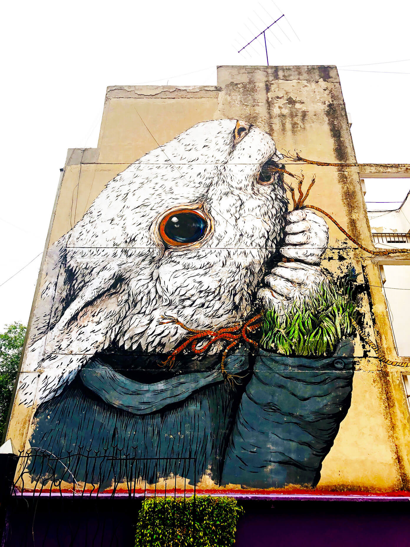 Rabbit Mural in Roma Mexico City