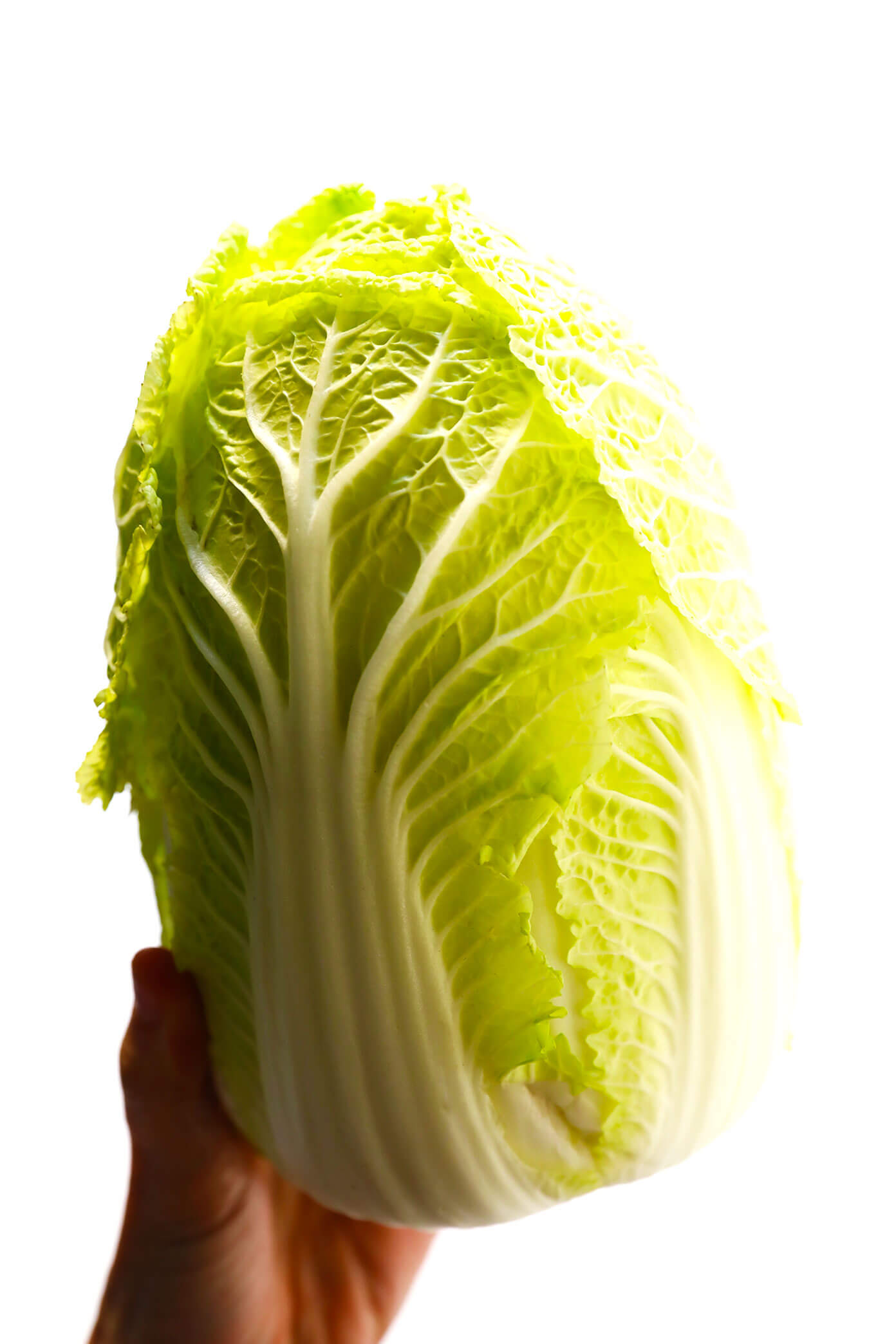 Chinese Napa Cabbage